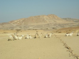 National park Wadi El Gemal