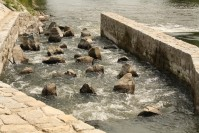 Fish pass on the Thaya river at stationing 36,612 km (even closer look)