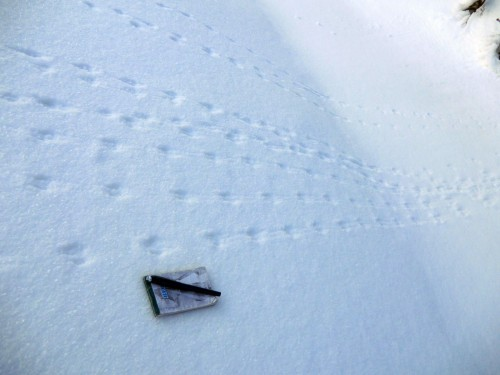 Footprints of mouse (Apodemus), mountain Čupel, PLA Beskydy, January 28th 2012