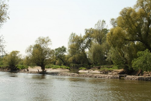 Renaturalization of Thaya river - the river broke through the regulated bank and created a side arm