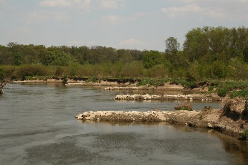 Groins on the Thaya river, Moravian border bank in the game-park Obora